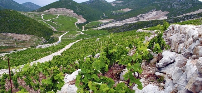 why-you-should-consider-taking-a-wine-tour-while-sailing-in-croatia
