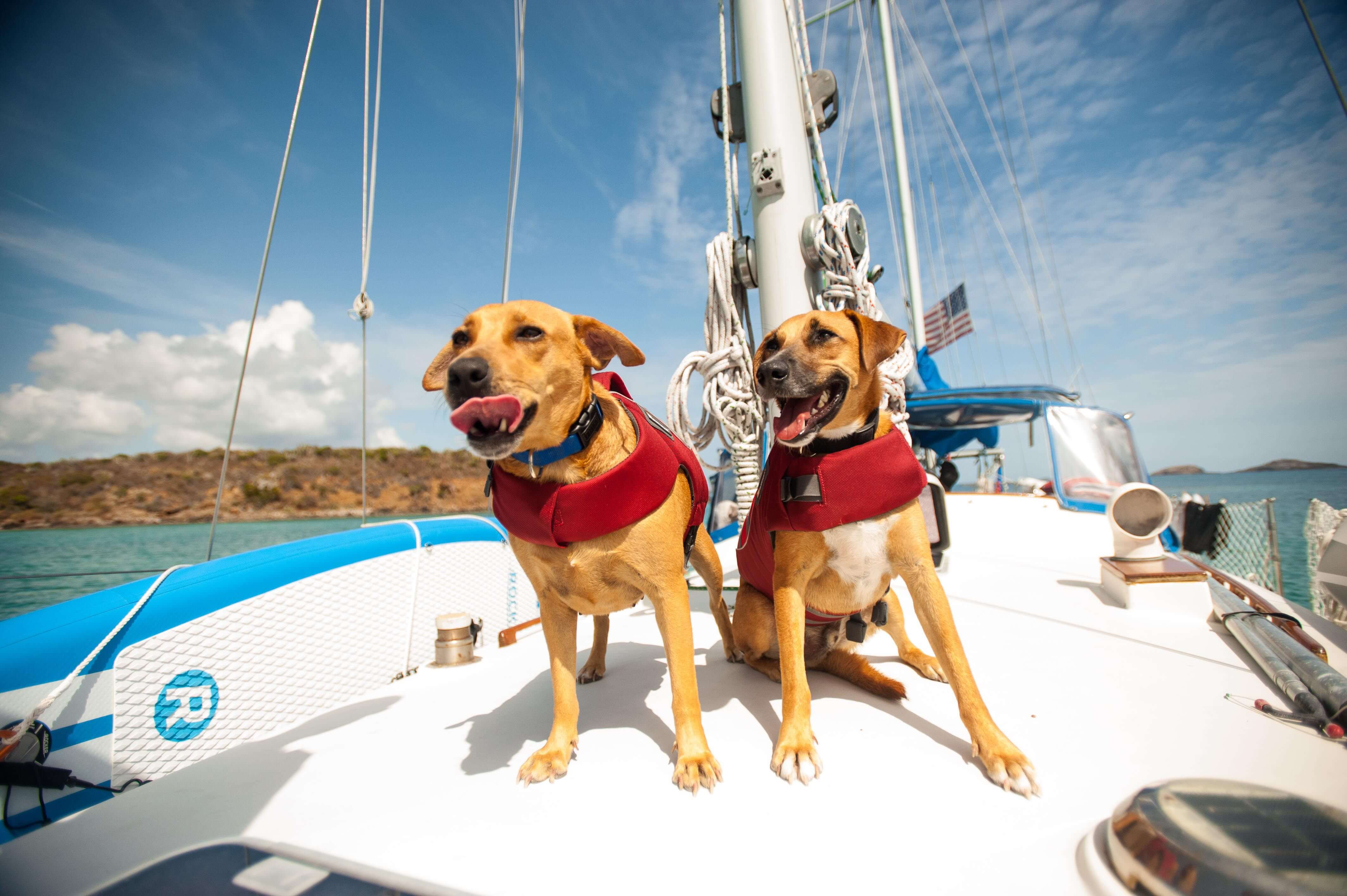 7-tips-for-safe-sailing-with-your-pets-in-croatia