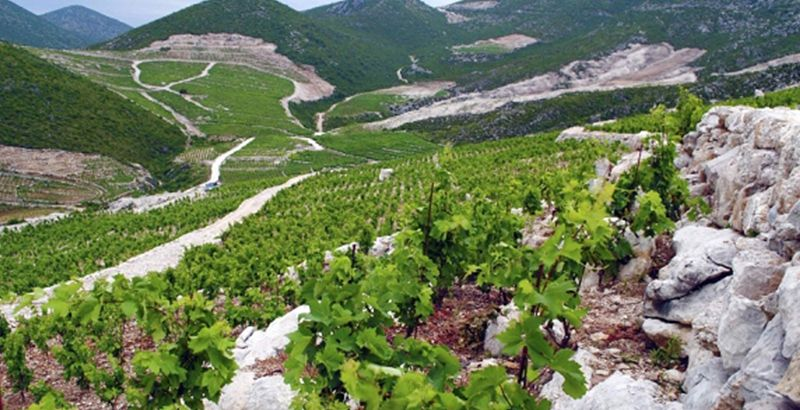 wine-tour-croatia-milos