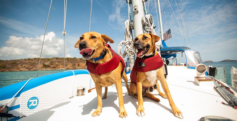 sailing-with-pets-safety-net
