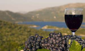 Wine Tours Croatia