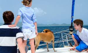 7 Tips For Safe Sailing With Your Dogs in Croatia